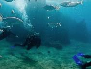 El Centro de Datos informa que en 2016 aumentó el turismo de buceo casi en un 50%, alcanzó la cifra de 146.000 personas