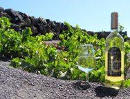Vega de Yuco embotella el primer vino de Canarias de 2017