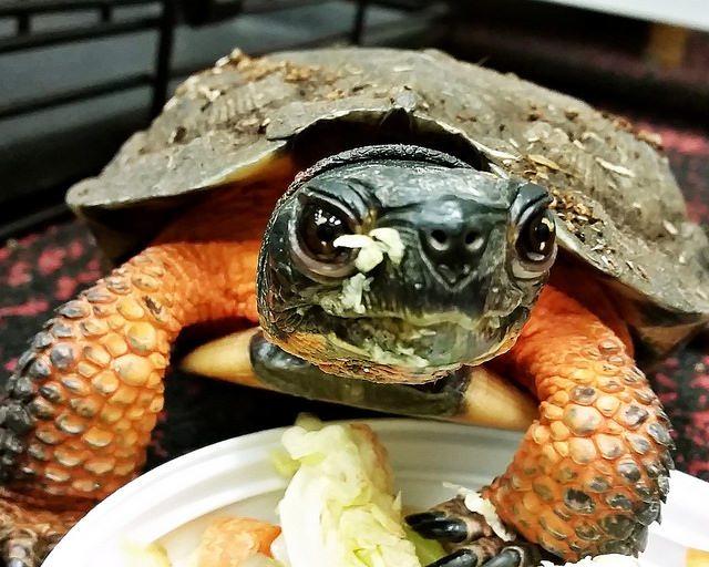 Turtle exhibit at the Massena Nature Center.