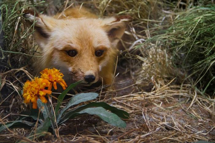 Outdoor wildlife on display at Massena Nature Center