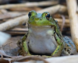 Feeling froggy at the Nature Center