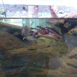 Aquarium display at the Nicandri Nature Center
