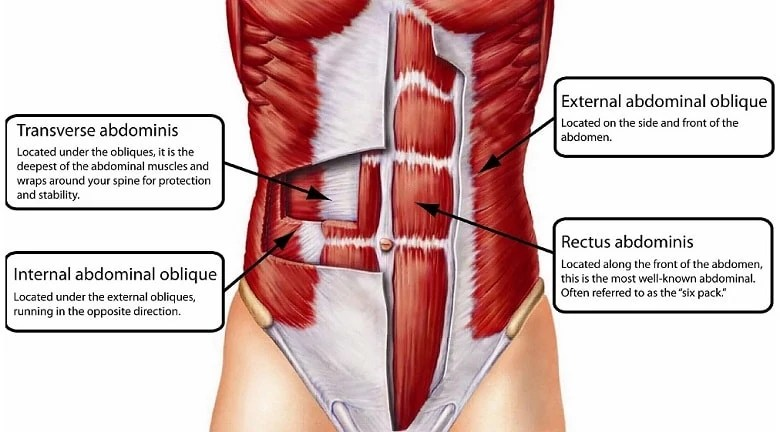 What are core muscles
