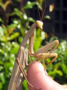 wassup homebug
