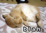 bunny is blah