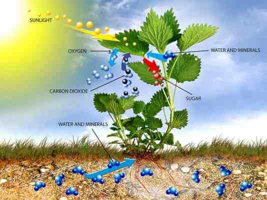 Proses Fotosintesis Pada Tumbuhan - Artikel Komplit