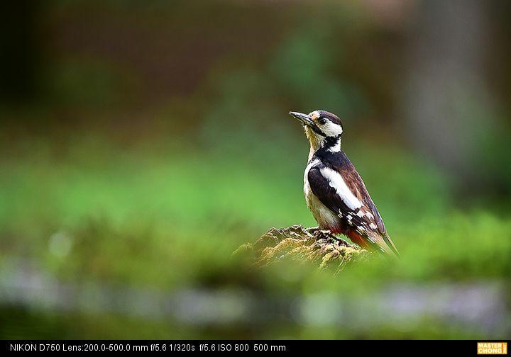 Nikon D750 AF-S NIKKOR 200-500mm f/5.6E ED VR  - Birding