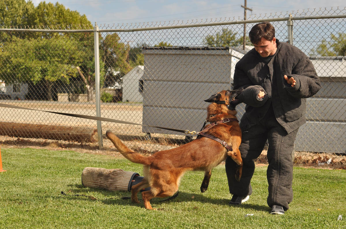 Dog Obedience Training Sacramento  This Wordpresscom. Email Marketing For Realtors. Venting Hot Water Heater Talro Auto Insurance. Learn Civil Engineering Locksmith In Queens Ny. House Window Glass Replacement. Technology Schools In Georgia. Family Recovery Center Oceanside Ca. Panasonic Business Phone System. Plate Tectonic Animation Plumber Riverside Ca