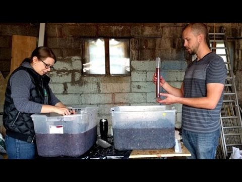 Making Red Wine from Grapes – Part 1