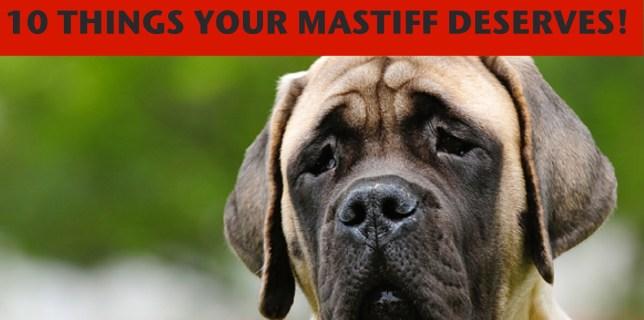 mastiff toys large dog accessories