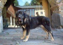 duquesa (7)