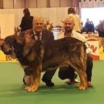 91 Exposición internacional canina de primavera en Madrid!!
