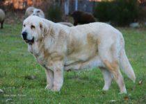 tracia (14)