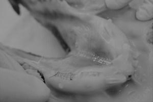 豚顎を使った手術練習