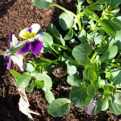 Cette fleur dans notre petit jardin savez vous son nom for Jardin lamartine