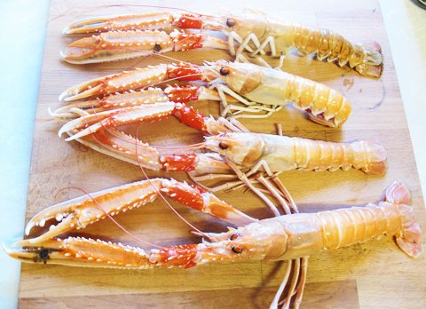 Scampi, store