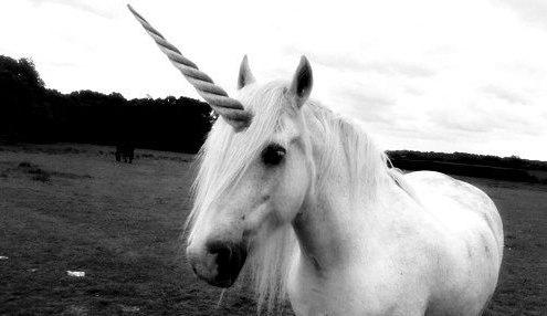 alex-unicorn-photo-for-her-blog