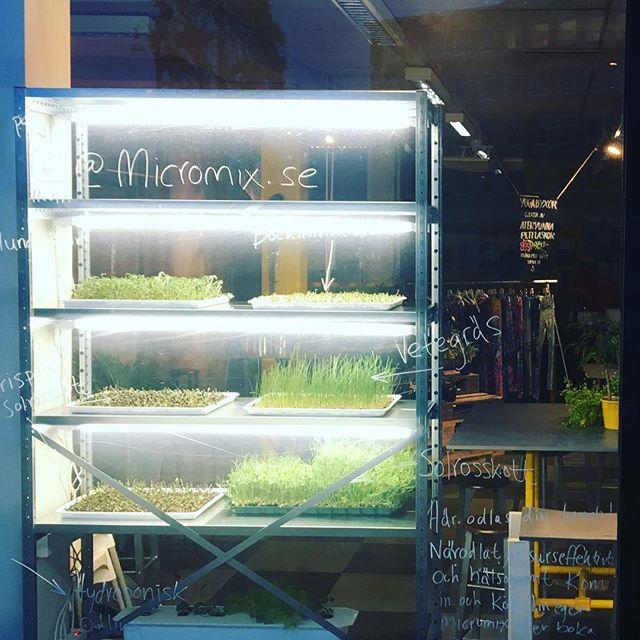 Vi säger välkomna till Micromix på Matería Popup. Nu börjar vi odla det mikrogröna till Matería på plats.