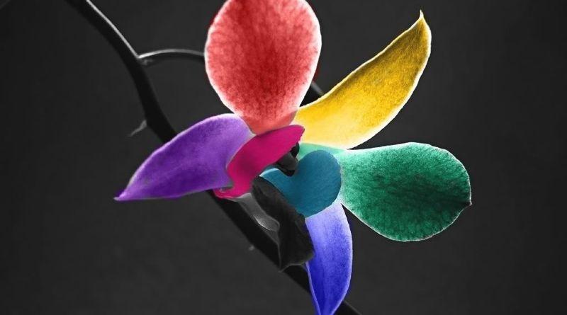 Design no artesanato - Flor arco-íris