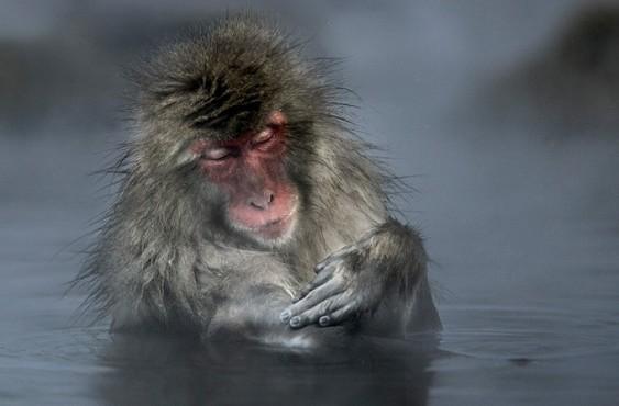Macaco na água