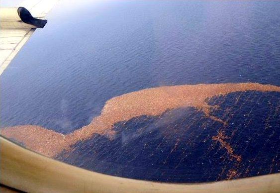 Lixo de tsunami navega rumo à California
