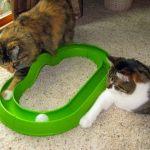 Vídeo muito divertido de um gato brincando com uma bolinha