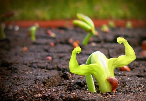 Resultado de imagem para energia vegetal