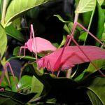 Nem sempre a 'esperança' é verde; ela pode ser cor-de-rosa