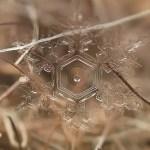 Incríveis fotos de etéreos cristais de gelo se dissolvendo