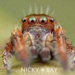 Os insetos e aranhas mais lindamente assustadores do mundo