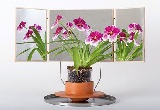 Flores espelhadas