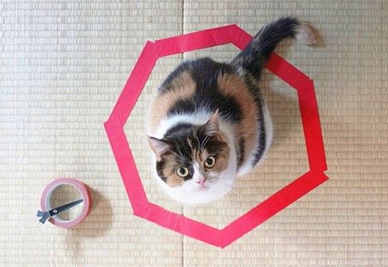 Gato preso dentro de círculo