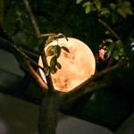 Lua Cheia brilha dentro de casa ou na decoração do seu jardim