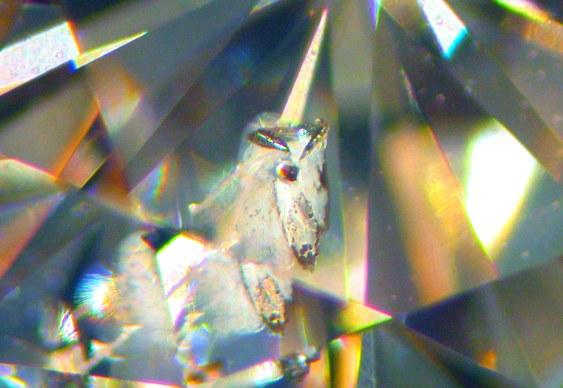 Brilhante cabeça de cavalo