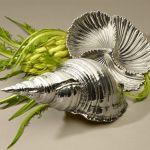 Conchas marinhas para decoração e como acessórios