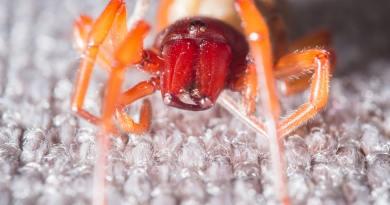 Meilleur araignée à friture en 2020