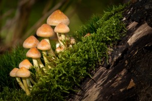 Photo of Mushrooms