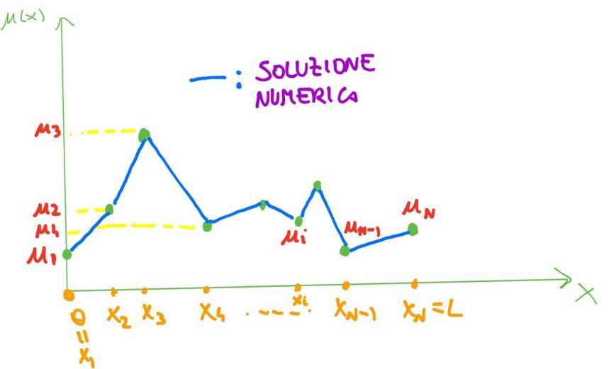 Soluzione numerica differenze finite