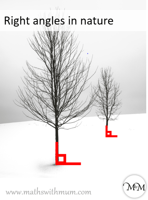 example of right angles in nature with trees going into the ground