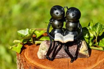 Μυρμήγκια διαβάζουν