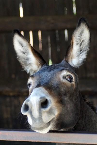 donkey 1560433943 - Απ' όλα τα πετούμενα