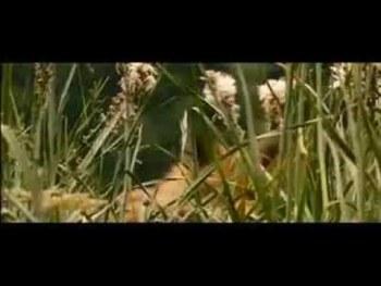 Το Παιδί και η Αλεπού – Le Renard et l' Enfant – 2007