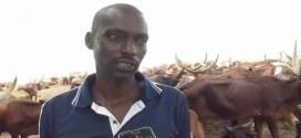 Affaire des Vaches en RDC