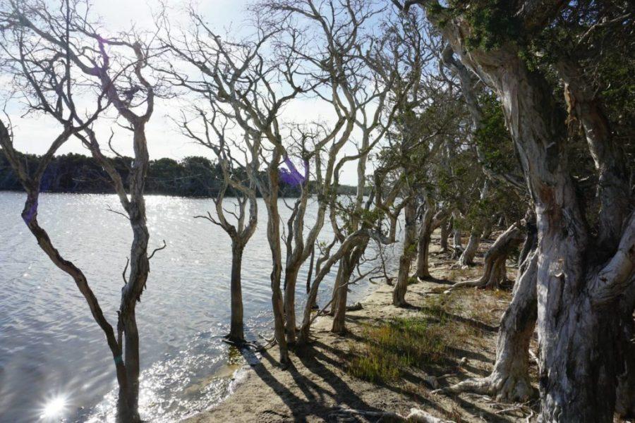 Kepwari Wetland walkin järvimaisemaa