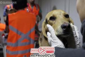 Vídeos: voluntários que salvaram 350 animais em Brumadinho 68