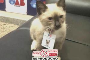Filhote de gato vira mascote da OAB: tem crachá e recebe advogados 66