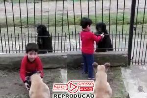 Menino divide ração do cão dele com outro que estava na rua e emociona: video 69