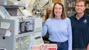 Erva-Santa é testada com sucesso para tratar Alzheimer 224