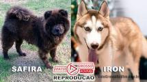 Mais duas mortes de cachorros por envenenamento este mês em Alta Floresta, dona dos animais se emociona ao lembrar 117