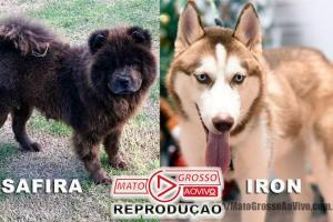 Mais duas mortes de cachorros por envenenamento este mês em Alta Floresta, dona dos animais se emociona ao lembrar 75